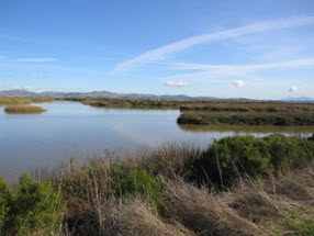 DU-restored wetland on the Napa River