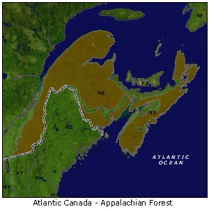 Atlantic Canada - Appalachian Forest map