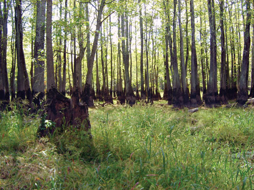 Porter forested wetland