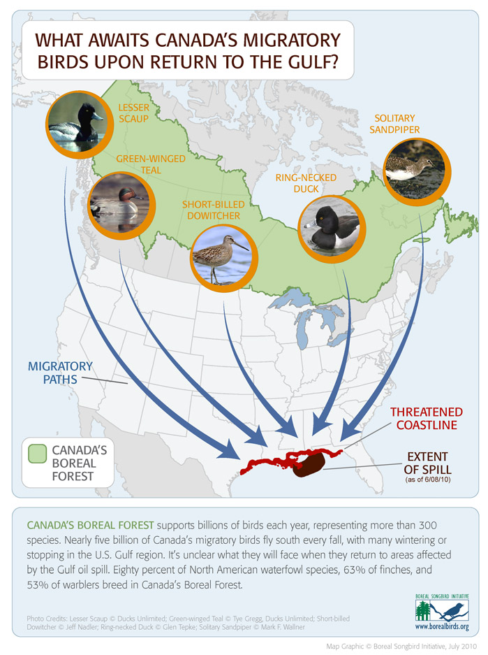 Boreal / Oil Spill infographic