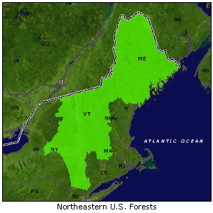 Northeastern U.S. Forests map