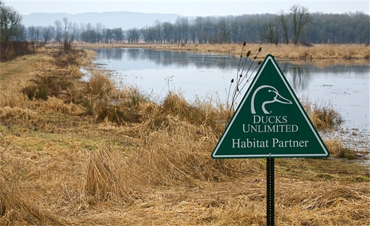 DU habitat restoration in Ridgefield National Wildlife Refuge