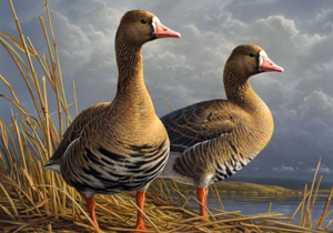 2010 Federal Duck Stamp winner