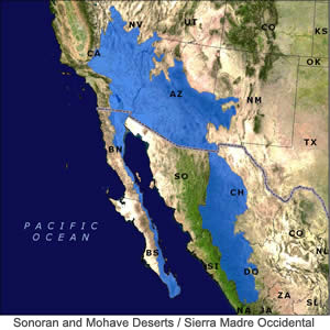 Sonoran and Mohave Deserts / Sierra Madre Occidental