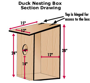 plans for building a wood duck nesting box