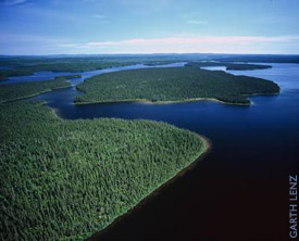 Boreal Forest wetlands
