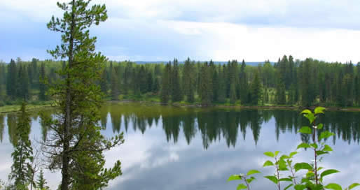 Western Boreal Forest