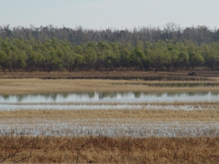 Oklahoma wetlands provide important habitat for waterfowl