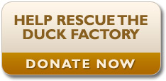 Donate to the Rescue the Duck Factory campaign today!