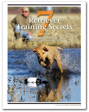7 Retriever Training Secrets