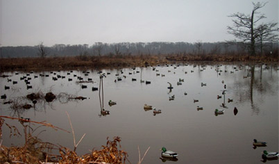 Decoys on lake