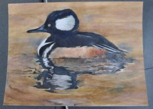 2011 Junior Duck Stamp Best of Show Winner painting of a Hooded Merganser, Student Artist,  Harrison Goecke from Post Falls, ID