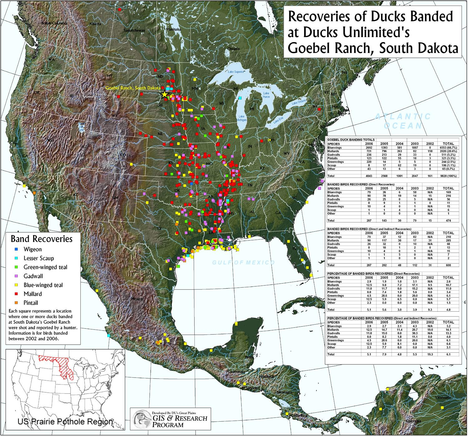 Ducks Unlimited Migration Map. Duck Migration Map And How Else Can ...