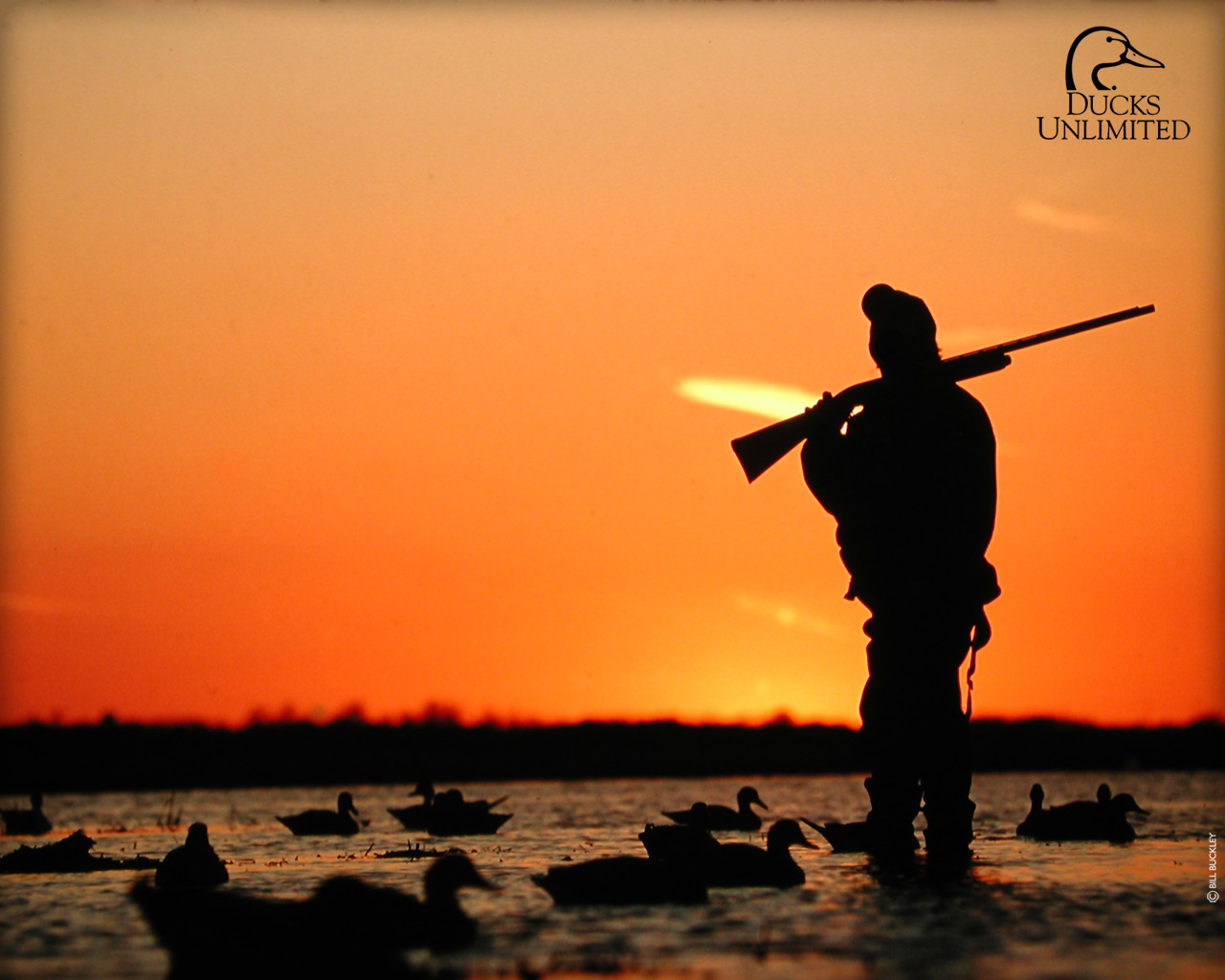 Duck Hunting Duck Hunting