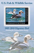 2009 Duck Stamp winner