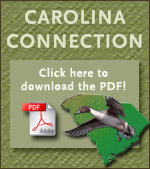 Click here to download the PDF version of Carolina Connection
