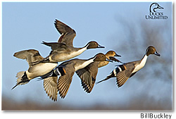 Ducks Unlimited: World Leader in Wetlands Conservation