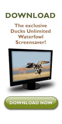 Download the DU Screensaver here!