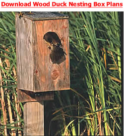 Download wood duck nesting box plans.