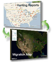 Click here for the migration and hunting reports map.