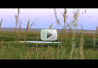 Click here to watch an urgent video message from Ducks Unlimited