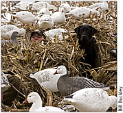 Decoy tips for snow geese