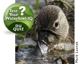 Test your knowledge with the all-new DU Waterfowl IQ quizzes today