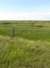 Grassland in the Dakotas; courtesy Scott Stephens, DU