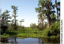 Louisiana wetland