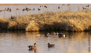 Water restrictions threaten waterfowl
