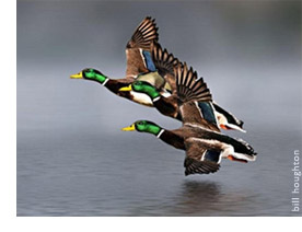 Read more of '15 Great Places to Hunt Waterfowl' from DU Magazine