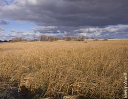 Read more of 'Waterfowling's Perfect Storm' from DU Magazine