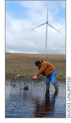 Wind energy and waterfowl habitat