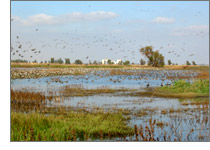 Sacramento National Wildlife Refuge habitat