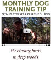 Watch this month's dog training tip from Mike Stewart