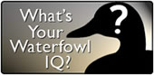What is Your Waterfowl IQ?