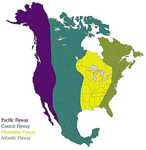Waterfowl Migration Flyways