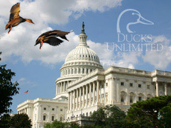 Ducks Unlimited's Governmental Affairs Office in Washington, D.C., is seeking two conservation policy interns