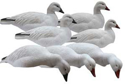 Pro Grade Life Size Snow, Blue Goose Decoy Shells
