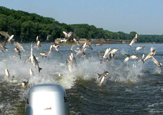 The President signed into law a bill making it a criminal offense to import Asian carp into the United States.