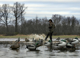 Making muddy water to draw in ducks