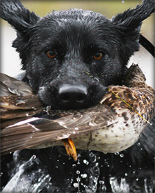 DU Retriever Photo Contest Winner